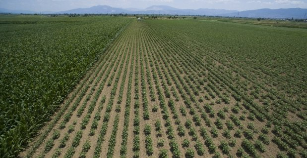 Şırnak'ta 11 bin 908 dekar tarım arazisi sulandı