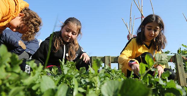 Hobi bahçesinde hasat sevinci
