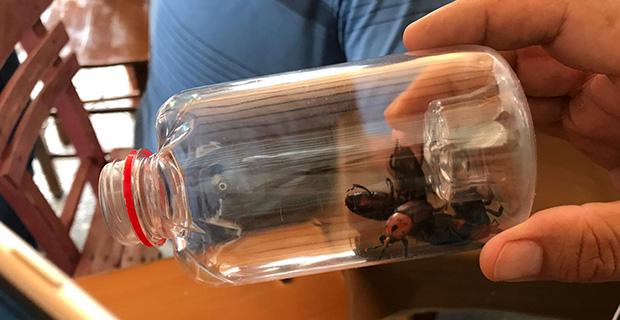 Bu böceğe dikkat!