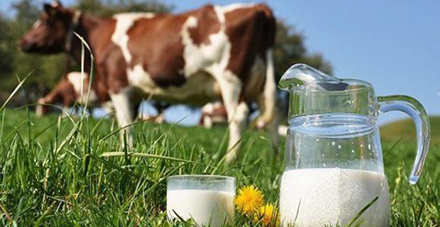 Süt miktarında artış