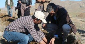 2 Bin Badem fidanı toprakla buluştu