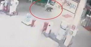 Akaryakıt istasyonunda bir ayı