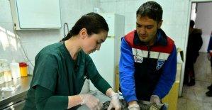 """Ankara Büyükşehir'den acil durumlarda hayvanlara müdahaleye ilişkin """"ilk yardım eğitimi"""""""
