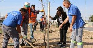 Büyükşehir'den milli ağaçlandırma gününe destek
