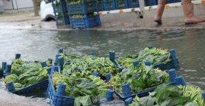Ispanakta zehirlenme iddiaları üreticiyi mağdur etti