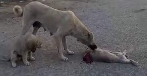 Ölen yavrusunun başında ağlayan köpek, görenleri duygulandırdı