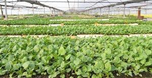 253 bin bitki üretildi