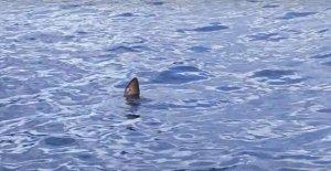 Köpek balığı sandılar, görünce şaşırdılar