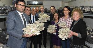 Tarsus Belediyesi'nde mantar hasadı